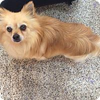 Adopt A Pet :: Hayden - Thousand Oaks, CA