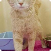 Adopt A Pet :: Tink Tink - Lincolnton, NC