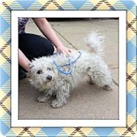 Adopt A Pet :: Bedford - IL - Tulsa, OK