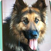 Adopt A Pet :: JIMMY VON JAEGAR - Los Angeles, CA