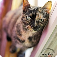 Adopt A Pet :: Lily - Lyons, NY