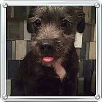Adopt A Pet :: Selena - Freeport, NY
