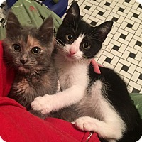 Adopt A Pet :: Gansey and Kaz are Cute, Sweet, and Snuggly - Brooklyn, NY
