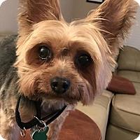 Adopt A Pet :: Maxx - Euless, TX