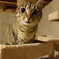 Adopt A Pet :: Carol - Florence, KY