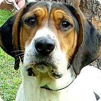 Adopt A Pet :: WRIGLEY(TRAINED-SO SMART A JOY - Wakefield, RI
