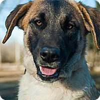 Adopt A Pet :: *Charlotte- PENDING - Westport, CT