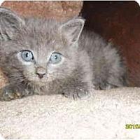 Adopt A Pet :: Oleg - Frenchtown, NJ
