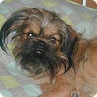Adopt A Pet :: Stitch - Homer Glen, IL