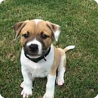 Adopt A Pet :: Rio - Austin, TX