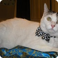 Adopt A Pet :: Kishoo - Davis, CA