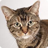 Adopt A Pet :: Phoebe - Chicago, IL