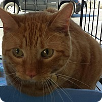 Adopt A Pet :: Nacho - Chandler, AZ