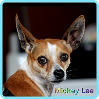 Adopt A Pet :: Mickey Lee - Hollywood, FL