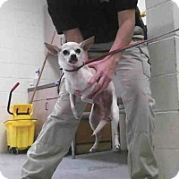 Adopt A Pet :: KIT - Conroe, TX