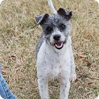 Adopt A Pet :: Rye - Patterson, CA