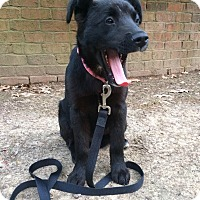 Adopt A Pet :: ISAAC - CHICAGO, IL