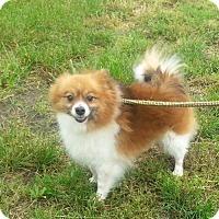 Adopt A Pet :: Harmony - Seaford, DE