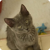 Adopt A Pet :: Boudica - West Palm Beach, FL