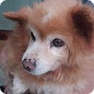 Adopt A Pet :: Dodge