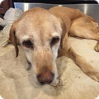 Adopt A Pet :: Vian - Alpharetta, GA