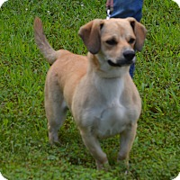 Adopt A Pet :: Jasper - Lebanon, MO