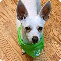 Adopt A Pet :: Winston - Boulder, CO