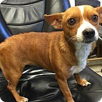 Adopt A Pet :: Norelle - Sparta, NJ