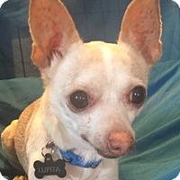 Adopt A Pet :: Lupita - San Leandro, CA