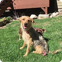 Adopt A Pet :: Smokey- great all around dog! - Los Angeles, CA