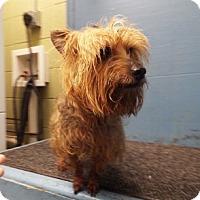 Adopt A Pet :: Carson - Chalfont, PA