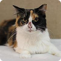 Adopt A Pet :: Nancy Drew - Midland, MI