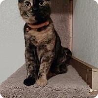 Adopt A Pet :: Memphis - Hanna City, IL