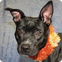 Adopt A Pet :: Jay - Jackson, MI
