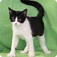 Adopt A Pet :: Seven - Danbury, CT