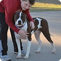 Pit Bull Terrier Mix Dog for adoption in Elgin, Oklahoma - Bentley