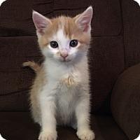 Adopt A Pet :: Grant - Denver, NC