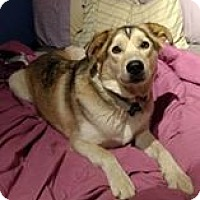 Adopt A Pet :: Meeka - Cavan, ON