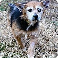Adopt A Pet :: Noelle - Fairfax, VA