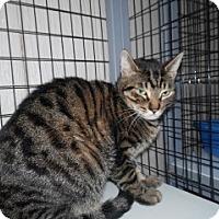 Adopt A Pet :: Dobby - Clarksville, AR