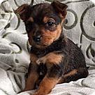 Adopt A Pet :: Seven Dwarfs Dopey