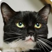 Adopt A Pet :: Luna - Medford, MA