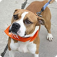 Adopt A Pet :: Taylor - North Wales, PA