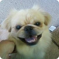Adopt A Pet :: Cashew - Portland, ME