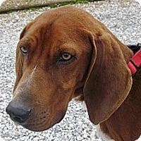 Adopt A Pet :: Sherlock - Albany, NY