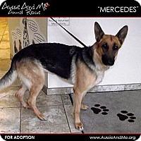 Adopt A Pet :: Mercedes - Sarasota, FL