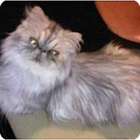 Adopt A Pet :: Jewel - Beverly Hills, CA