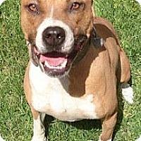 Adopt A Pet :: Ronan - Gilbert, AZ
