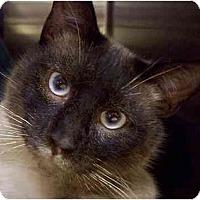 Adopt A Pet :: Meeko-San - Annapolis, MD