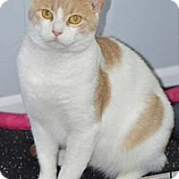 Adopt A Pet :: Ocean - Merrifield, VA